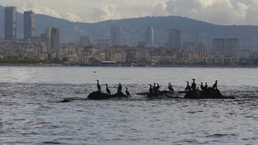 İstanbul'un saklı adaları! 26