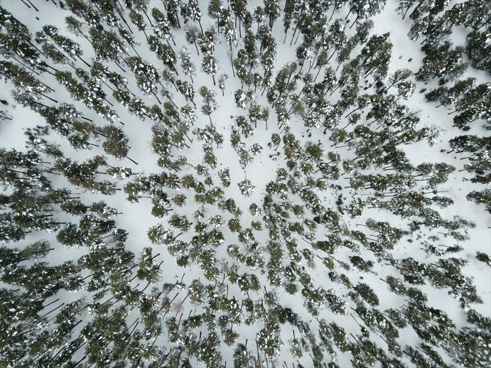 Sarıçam ormanlarında kartpostallık şölen 3
