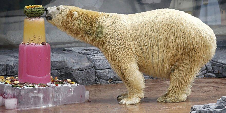 Tropikal bölgede doğan tek kutup ayısı Inuka öldü