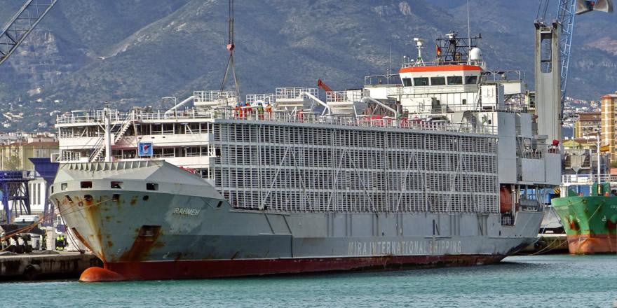 Şarbonlu hayvanları taşıyan dev gemi İzmir'e demir attı