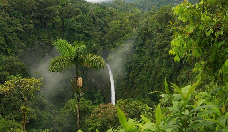 Amazonlarda insan yerleşimine dair yeni izler bulundu