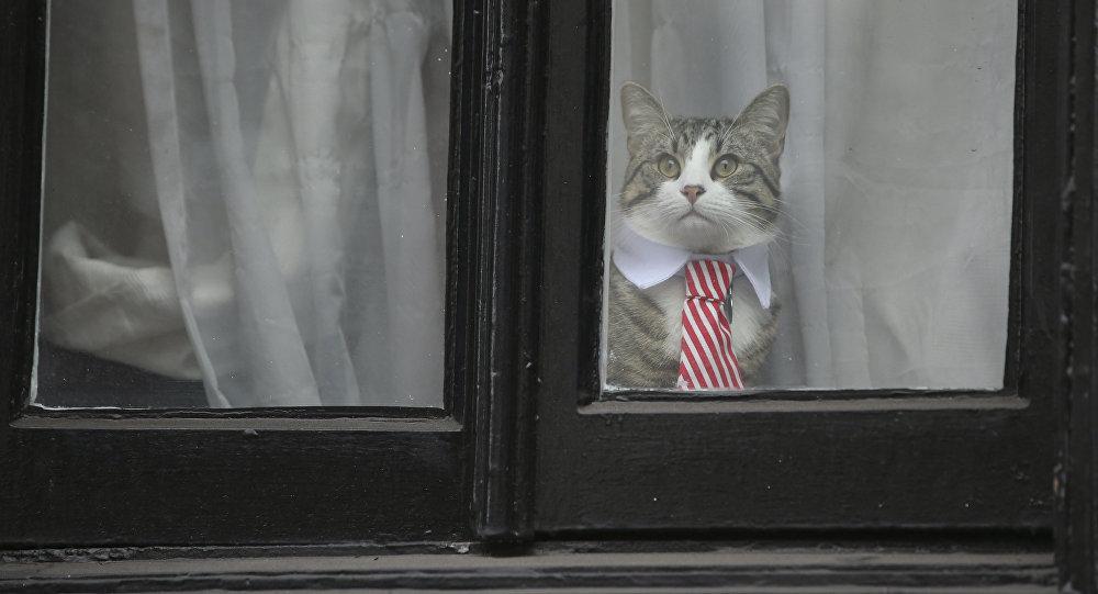 Assange'dan sonra bu kez kedi James 'casuslukla' suçlandı, WikiLeaks tepki gösterdi