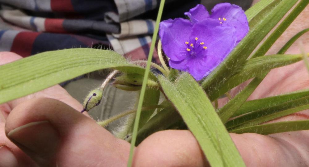 Son 250 yılda 600'a yakın bitki türünün nesli tükendi