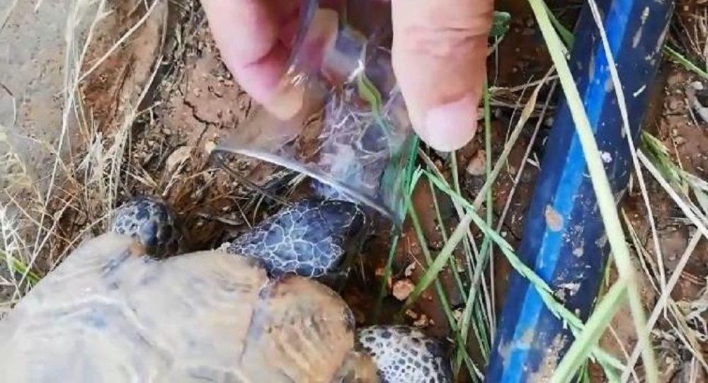 Diyarbakır'da bir kişi, sıcaktan bunalan kaplumbağaya bardaktan su içirdi