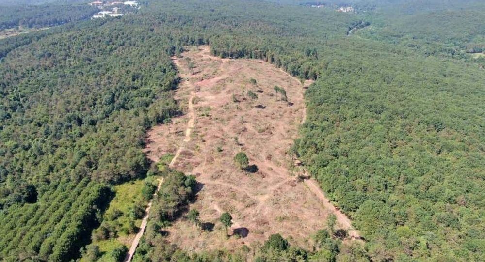 Bakanlıktan ağaç katliamı iddialarıyla ilgili açıklama