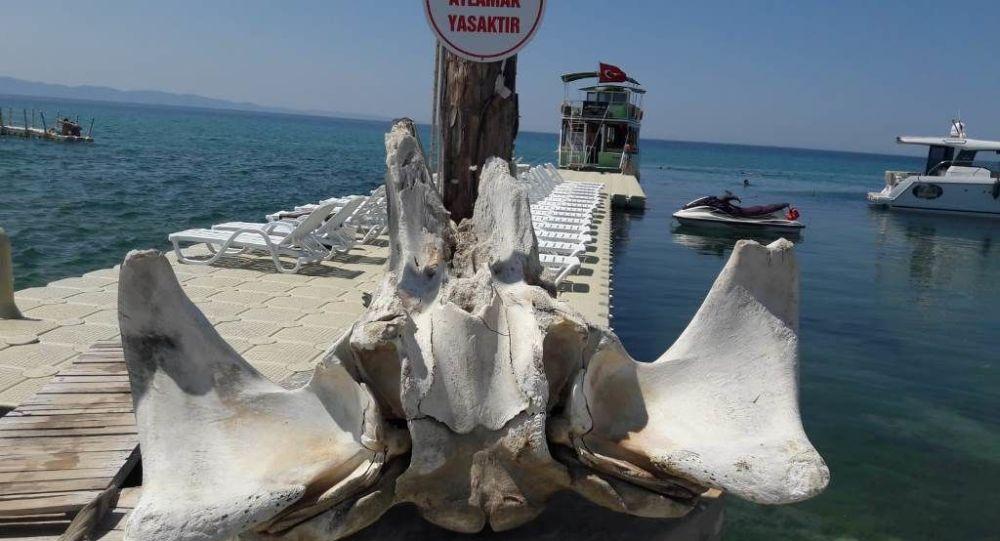 Yüzerken balina kemikleri buldu