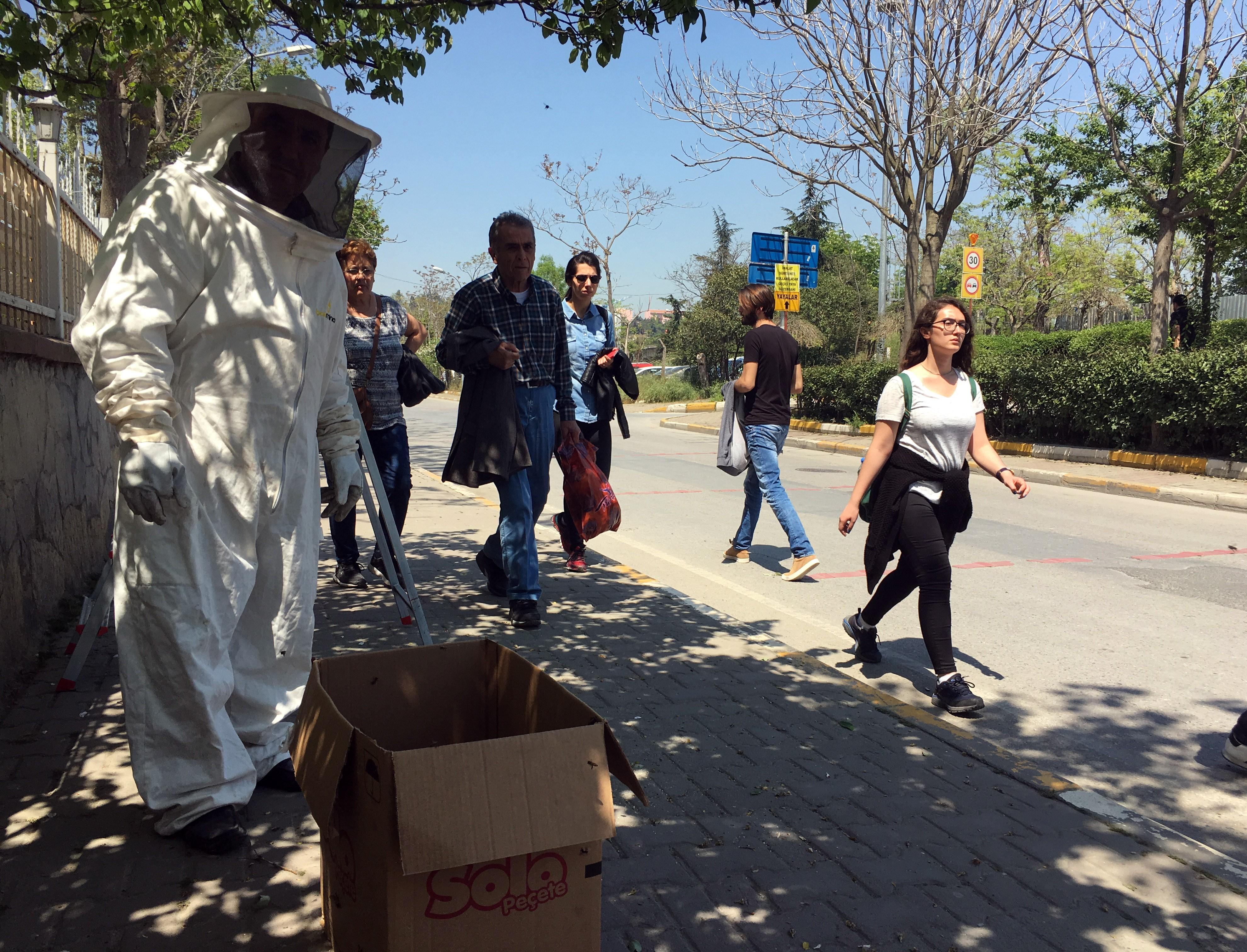 Kadıköy'ü arılar bastı