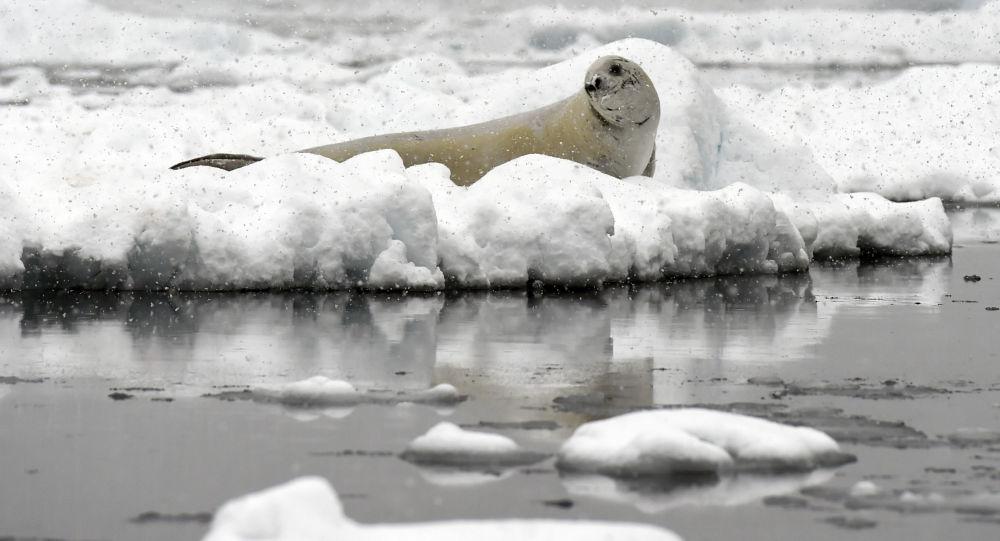'Buzulların erimesi ölümcül virüsün yayılmasını tetikliyor'