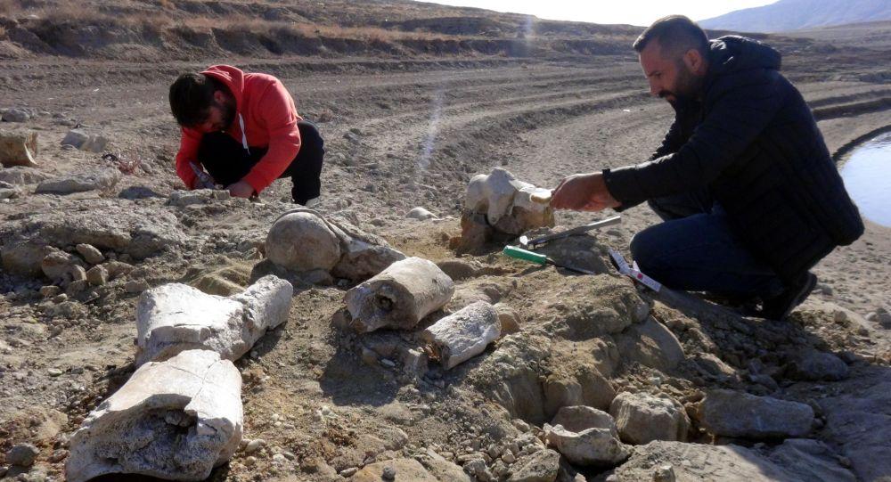 Balık tutmaya gelen kişi ihbar etti: Kayseri'de 7.5 milyon yıllık yeni fosil bulundu