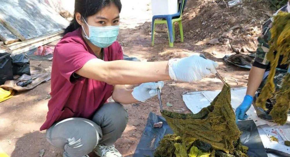 Tayland'da ölü bulunan geyiğin midesinden 7 kilo çöp ve plastik çıktı