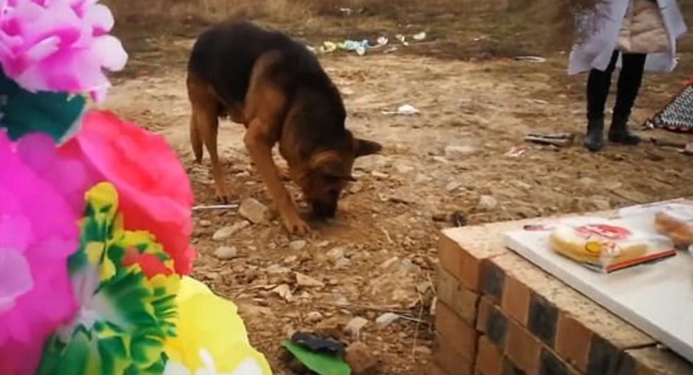 Ölen sahibini özleyen köpek, toprağı kazarak sahibine ulaşmaya çalıştı