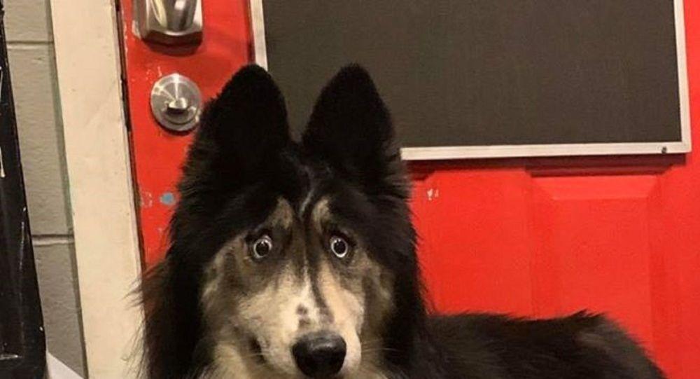 'Bakışları tuhaf' diye terk edilen köpeğe 2 yıl sonra yeni ev