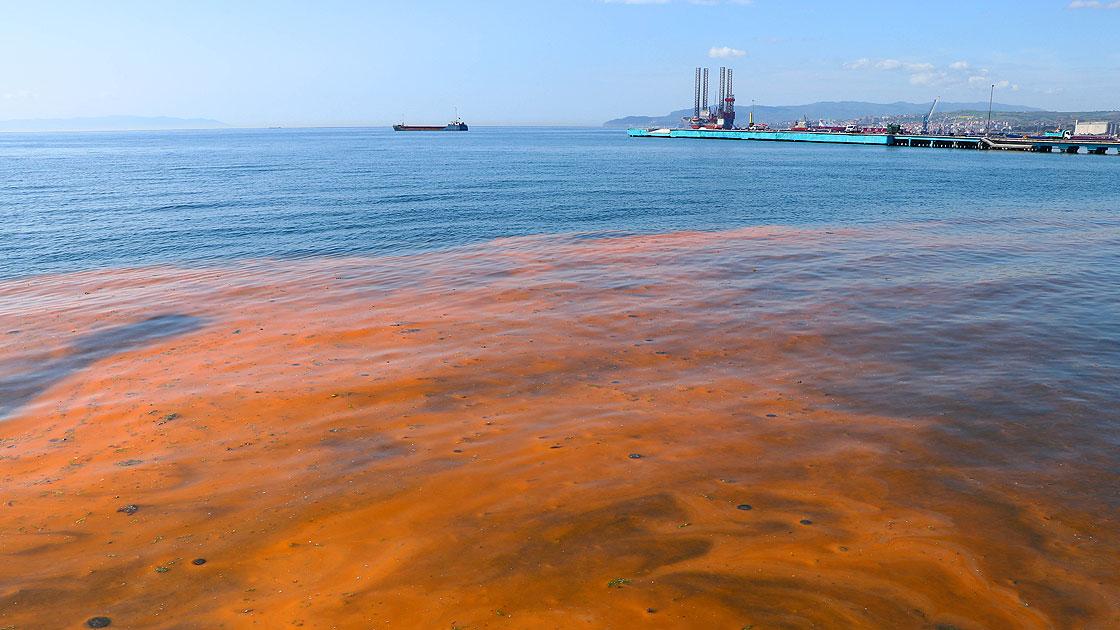 Planktonların çoğalmasıyla Marmara Denizi turuncuya büründü