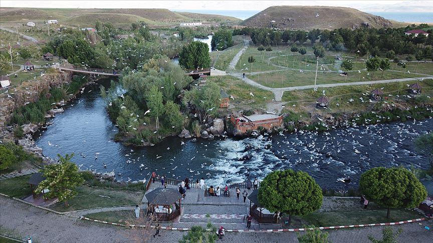 Vanlılar inci kefalinin göç yolculuğunu ilgiyle izliyor